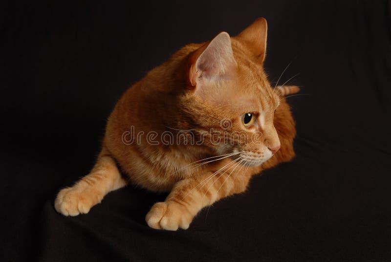 Παιχνίδι 3 γατών στοκ φωτογραφίες με δικαίωμα ελεύθερης χρήσης