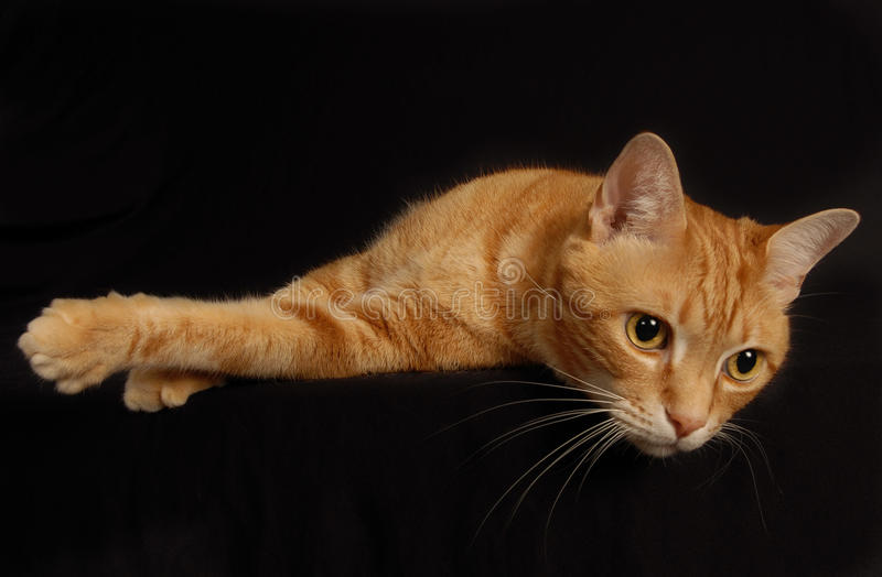 παιχνίδι 4 γατών στοκ φωτογραφία με δικαίωμα ελεύθερης χρήσης