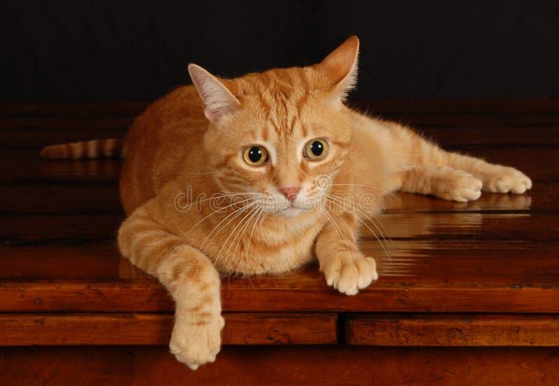 Παιχνίδι 13 γατών στοκ φωτογραφίες με δικαίωμα ελεύθερης χρήσης