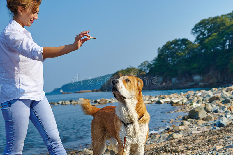 Παιχνίδι γυναικών με το σκυλί στοκ φωτογραφία με δικαίωμα ελεύθερης χρήσης
