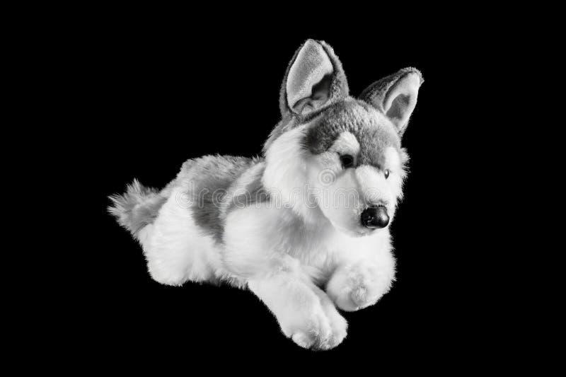 Παιχνίδι ενός βόρειου σκυλιού Inuit στοκ εικόνες με δικαίωμα ελεύθερης χρήσης