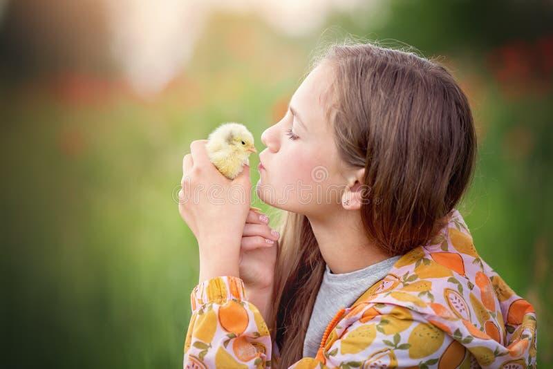 Παιχνίδι μικρών κοριτσιών με το κοτόπουλο στοκ φωτογραφία με δικαίωμα ελεύθερης χρήσης