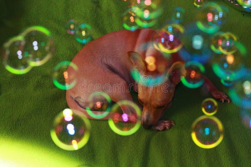 Παιχνίδι σκυλιών με τις φυσαλίδες στοκ εικόνες με δικαίωμα ελεύθερης χρήσης