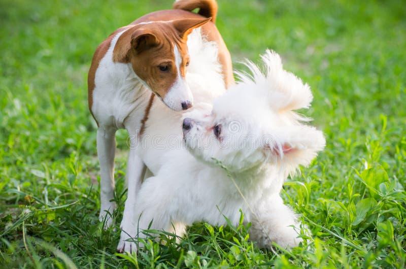 παιχνίδι σκυλιών στοκ εικόνες