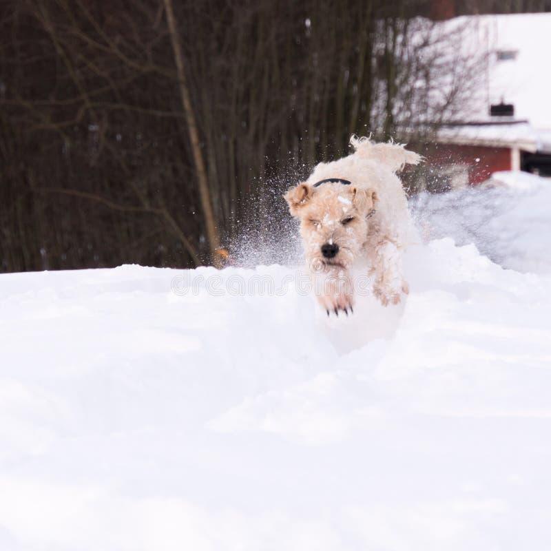 Παιχνίδι Softis στο χιόνι στοκ εικόνες