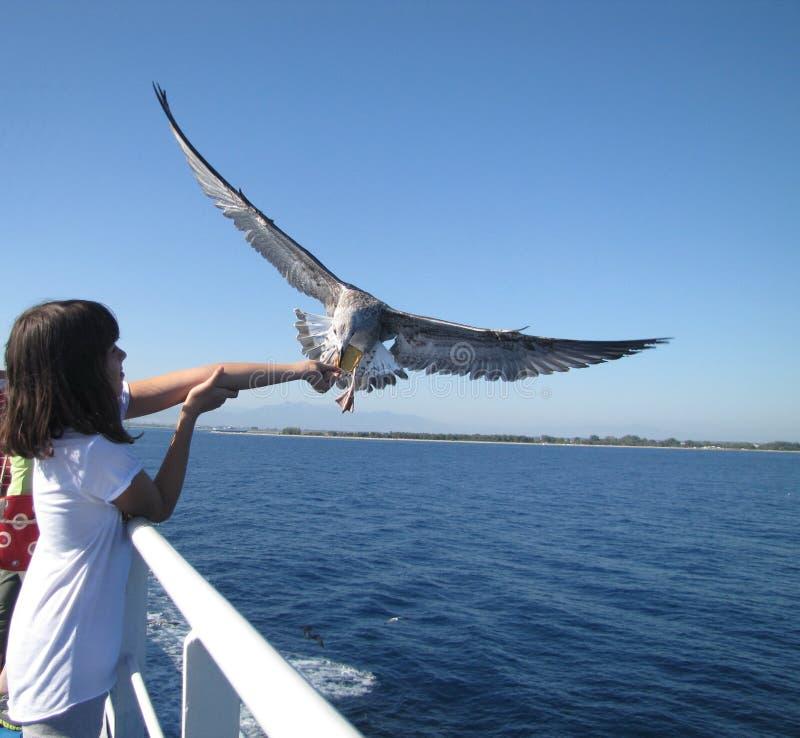 Παιδί και seagull στοκ εικόνα