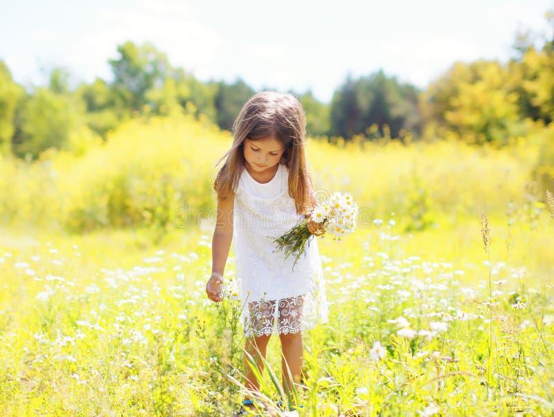 Παιδί μικρών κοριτσιών στα λουλούδια επιλογής λιβαδιών chamomiles στοκ εικόνα