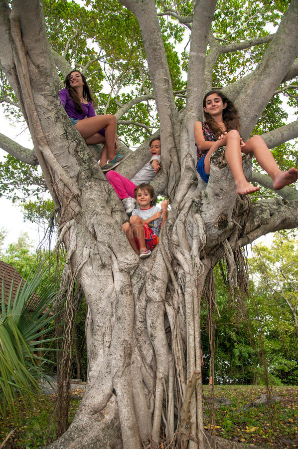 Παιδιά επάνω ένα δέντρο στοκ εικόνες