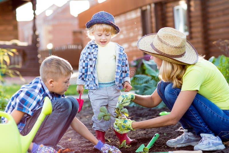 Παιδιά με τη μητέρα που φυτεύει το σπορόφυτο φραουλών στο χώμα έξω στον κήπο στοκ εικόνα με δικαίωμα ελεύθερης χρήσης