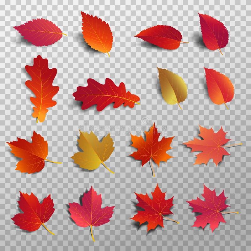 Πακέτο φύλλων φθινοπώρου Ρεαλιστική πτώση άδειας με τη σκιά διανυσματική απεικόνιση