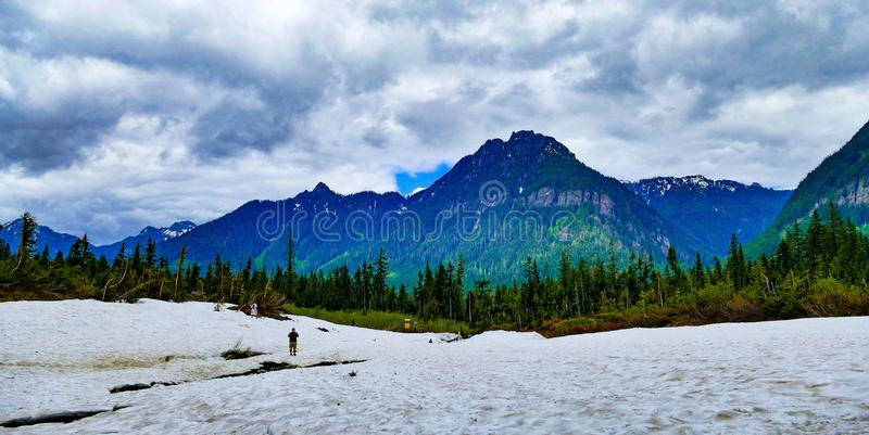 Πακέτο χιονιού στη γραμμή δέντρων στοκ εικόνα με δικαίωμα ελεύθερης χρήσης