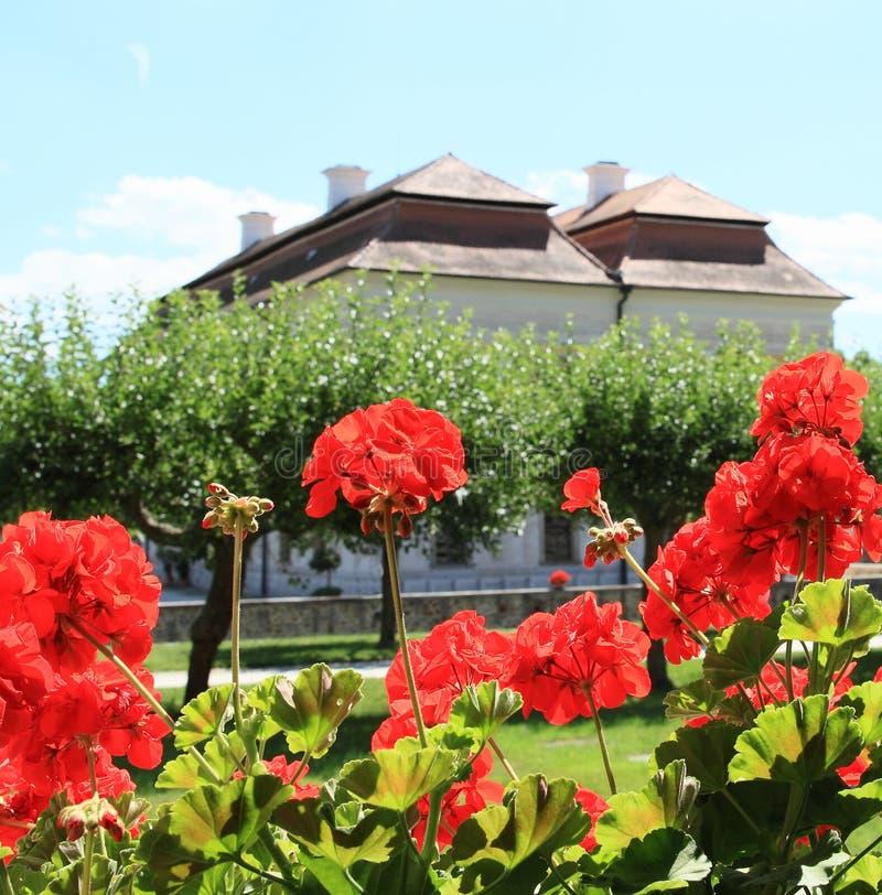 Παλάτι Kratochvile πίσω από τα κόκκινα λουλούδια και τα δέντρα στοκ εικόνες