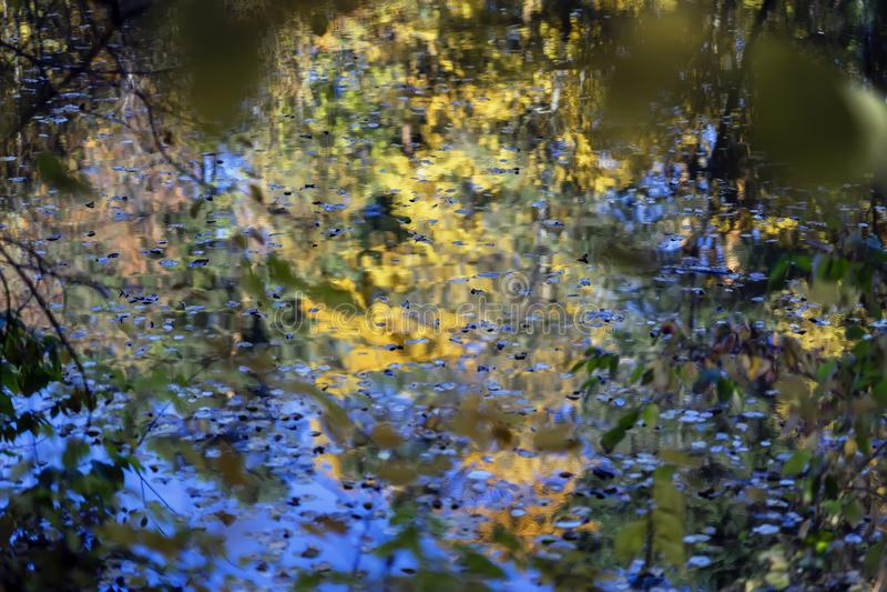 Παλέτα φθινοπώρου Αντανάκλαση των ζωηρόχρωμων δέντρων στο νερό, παρόμοια με το watercolor Πτώση, τοπίο του δάσους φυσικού στοκ εικόνες