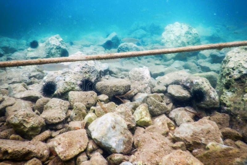 Παλαιά άποψη σχοινιών από υποβρύχιο στον καραϊβικό ωκεανό στοκ φωτογραφίες