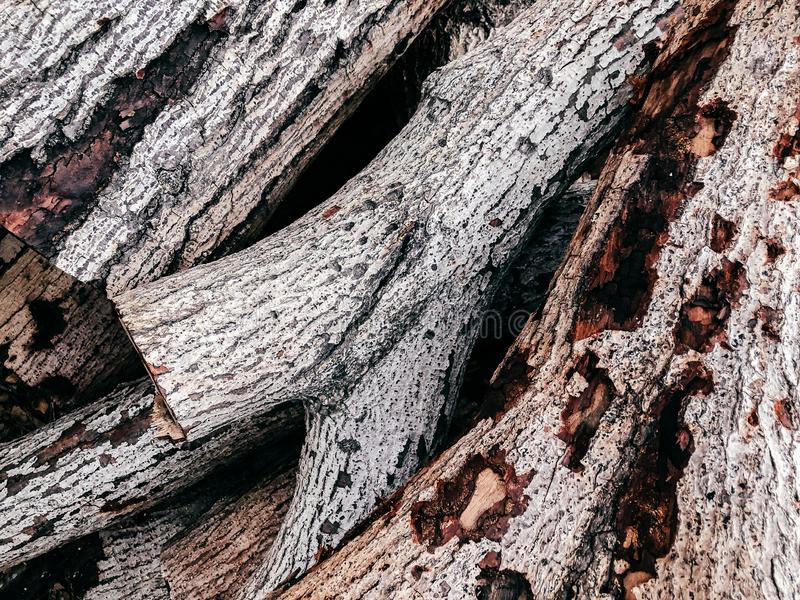 Παλαιά άσπρη ξύλινη επιφάνεια σύστασης κούτσουρων στοκ εικόνες