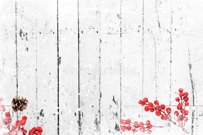 Παλαιά άσπρη ξύλινη σύσταση με το μούρο χιονιού και ελαιόπρινου στοκ εικόνες