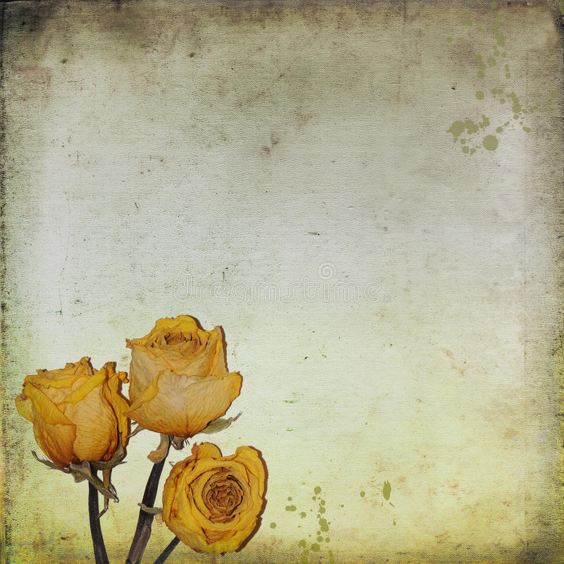 Παλαιά ανασκόπηση εγγράφου με τα ξηρά τριαντάφυλλα διανυσματική απεικόνιση