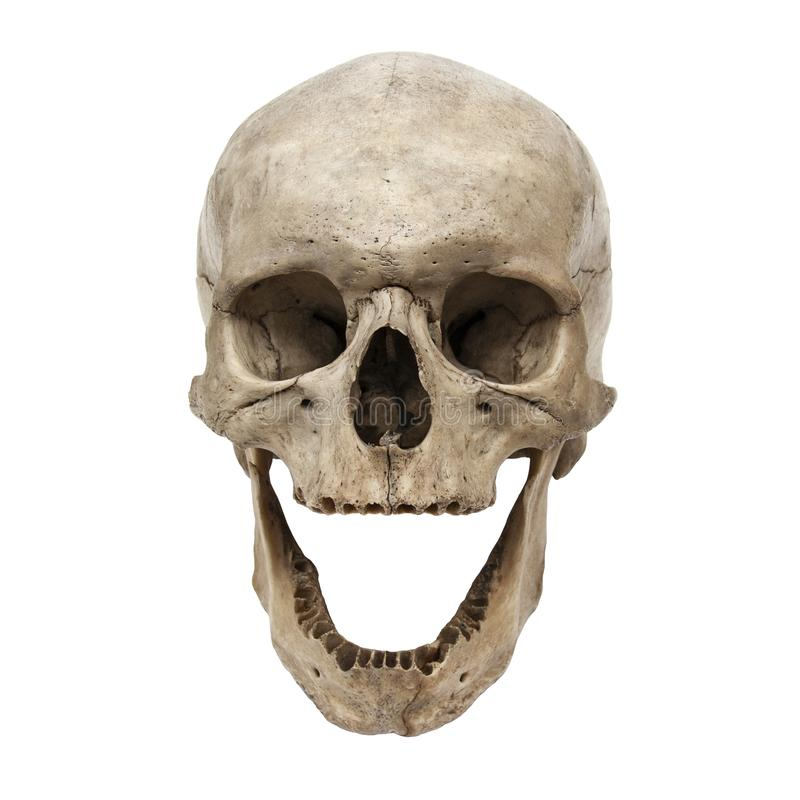 Παλαιά ανθρώπινη άποψη κρανίων από το μέτωπο χωρίς δόντια στοκ φωτογραφία