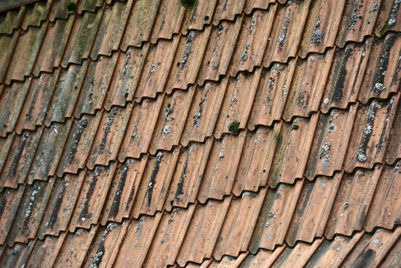 Παλαιά βρώμικη κεραμωμένη στέγη με το βρύο στοκ εικόνα