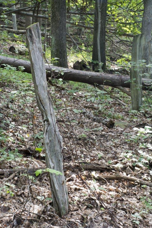 Παλαιά γραμμή φρακτών στο δάσος στοκ εικόνα με δικαίωμα ελεύθερης χρήσης