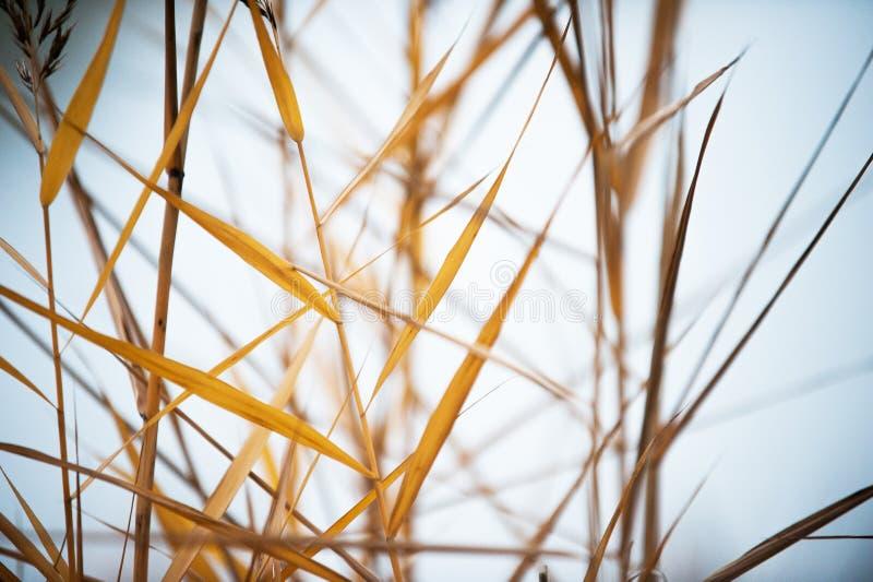 Παλαιά κίτρινη χλόη στον ήλιο Χαμηλό βάθος του τομέα στοκ εικόνες