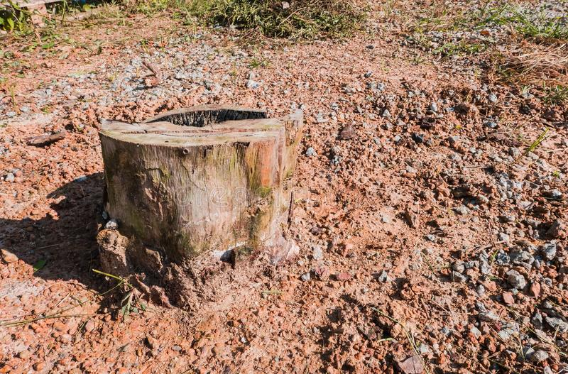 Παλαιά κολοβώματα δέντρων που προκαλούνται από την αποδάσωση και το έγκαυμα στοκ φωτογραφία με δικαίωμα ελεύθερης χρήσης