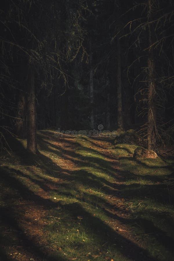 Παλαιά μυστήρια πορεία στο δάσος με την ηλιοφάνεια στο δασικό πάτωμα Οδήγηση σε ένα άγριο αυξημένο σκοτεινό δάσος στοκ φωτογραφίες με δικαίωμα ελεύθερης χρήσης
