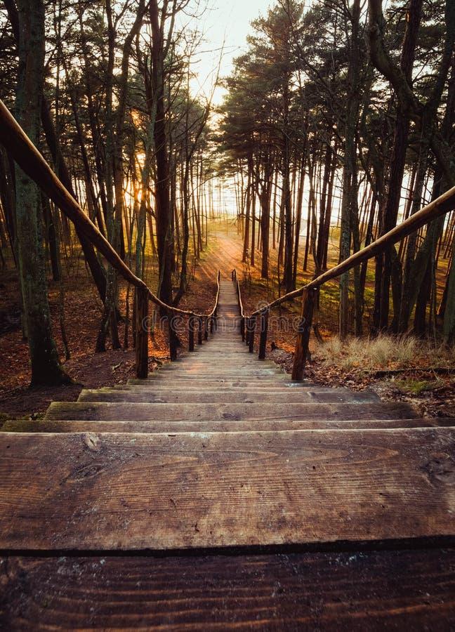 Παλαιά ξύλινα βήματα μιας όμορφης σκάλας που οδηγεί κάτω στη θάλασσα σε ένα δάσος πεύκων στο ηλιοβασίλεμα στη Λιθουανία, Klaipeda στοκ φωτογραφία με δικαίωμα ελεύθερης χρήσης
