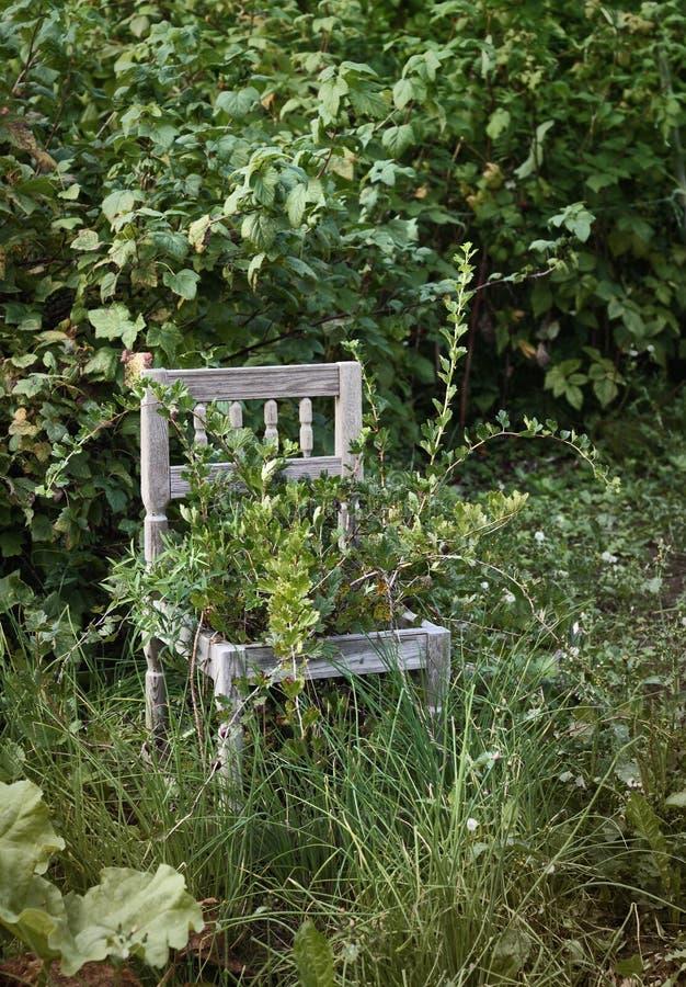 Παλαιά ξύλινη έδρα στον άγριο κήπο