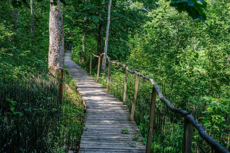παλαιά ξύλινη γέφυρα για πεζούς σανίδων με τα σκαλοπάτια στο δάσος στοκ εικόνα με δικαίωμα ελεύθερης χρήσης