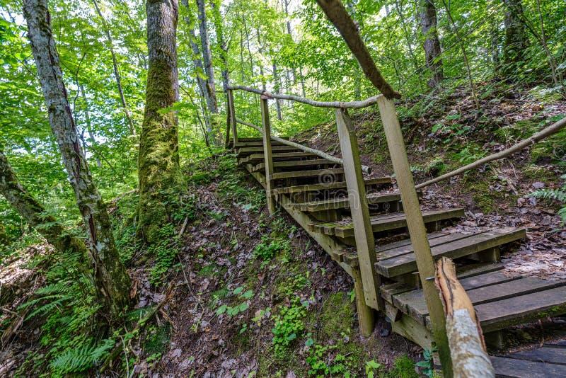 παλαιά ξύλινη γέφυρα για πεζούς σανίδων με τα σκαλοπάτια στο δάσος στοκ φωτογραφίες