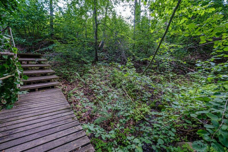 παλαιά ξύλινη γέφυρα για πεζούς σανίδων με τα σκαλοπάτια στο δάσος στοκ φωτογραφίες με δικαίωμα ελεύθερης χρήσης