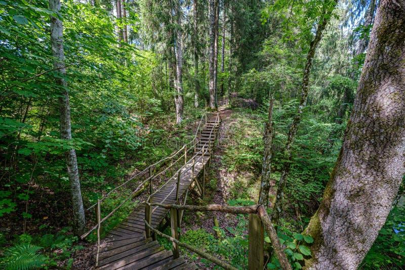 παλαιά ξύλινη γέφυρα για πεζούς σανίδων με τα σκαλοπάτια στο δάσος στοκ εικόνες