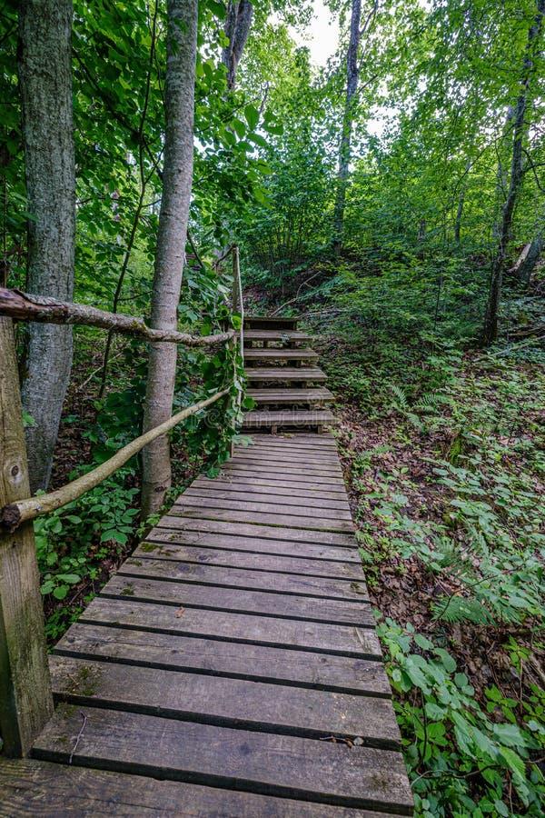 παλαιά ξύλινη γέφυρα για πεζούς σανίδων με τα σκαλοπάτια στο δάσος στοκ εικόνες με δικαίωμα ελεύθερης χρήσης