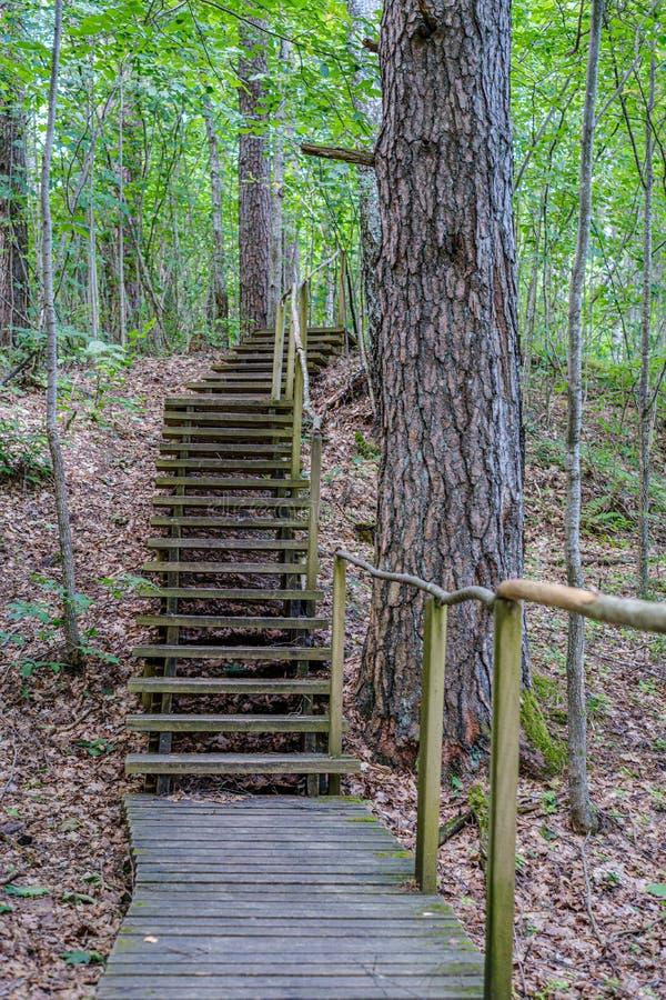 παλαιά ξύλινη γέφυρα για πεζούς σανίδων με τα σκαλοπάτια στο δάσος στοκ εικόνα
