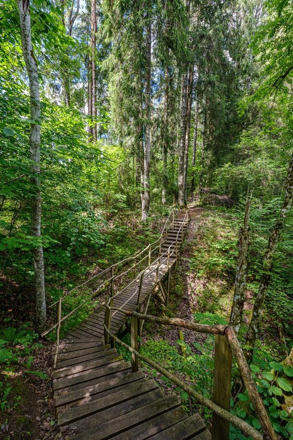 παλαιά ξύλινη γέφυρα για πεζούς σανίδων με τα σκαλοπάτια στο δάσος στοκ φωτογραφία με δικαίωμα ελεύθερης χρήσης