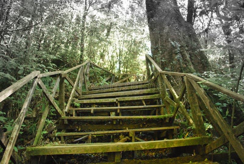 Παλαιά ξύλινη σκάλα που οδηγεί στο βαθύτερο δάσος στοκ φωτογραφία