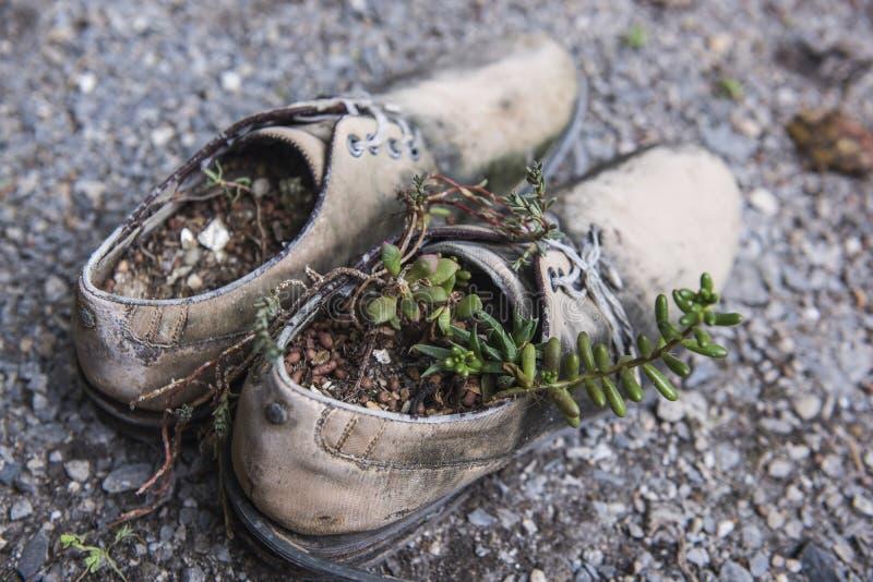 Παλαιά παπούτσια με τα μικρά δέντρα στα πέλματα παπουτσιών στοκ εικόνα με δικαίωμα ελεύθερης χρήσης