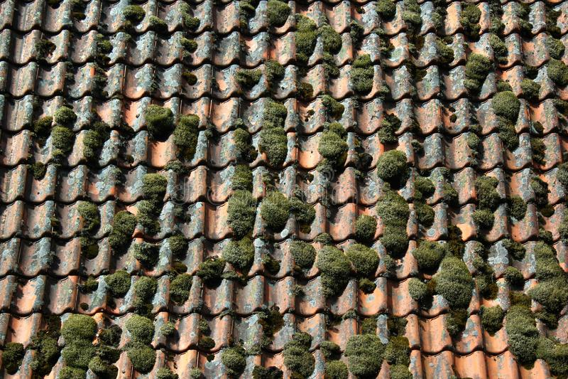 Παλαιά παραδοσιακή καλυμμένη βρύο στέγη πετρών στη Νορβηγία στοκ εικόνες