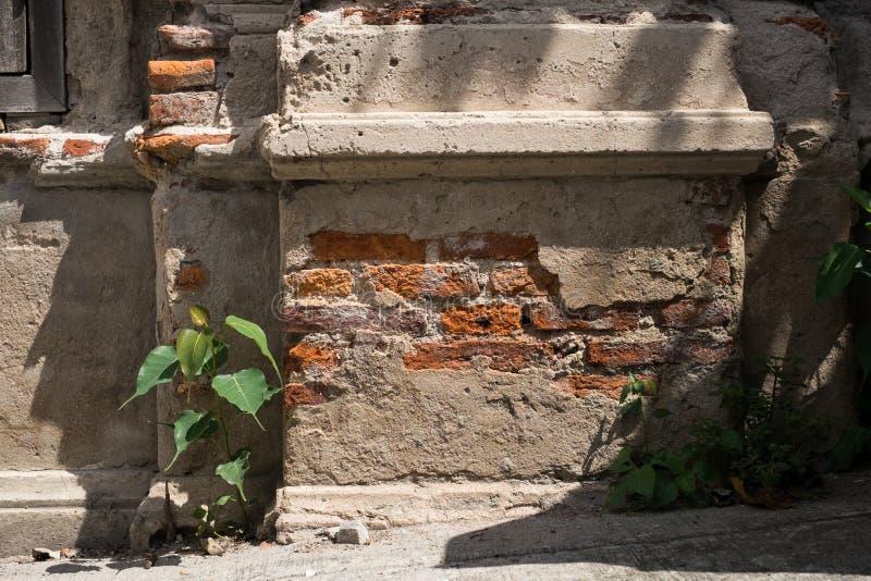 Παλαιά σύσταση και εγκαταστάσεις τουβλότοιχος σπασιμάτων στοκ εικόνες με δικαίωμα ελεύθερης χρήσης