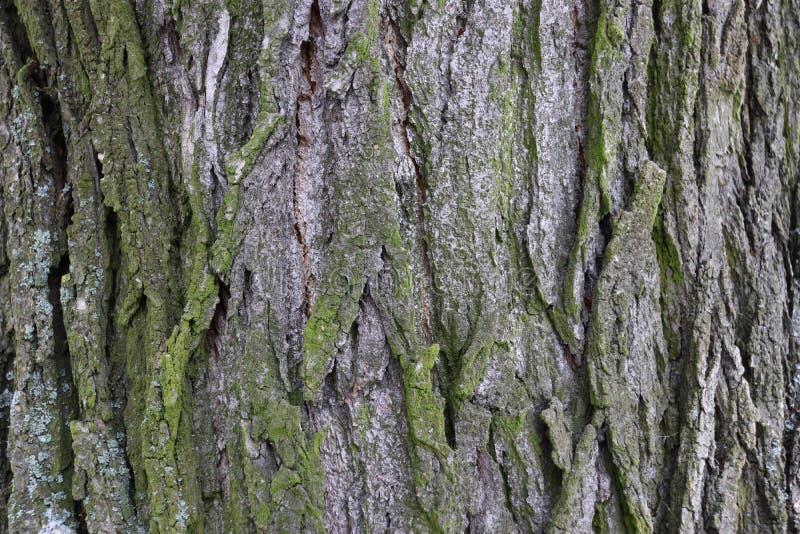 Παλαιά σύσταση σχεδίων δέντρων στοκ φωτογραφίες