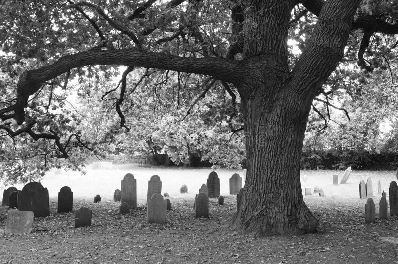 Παλαιές βαλανιδιά και ταφόπετρες στοκ φωτογραφίες με δικαίωμα ελεύθερης χρήσης