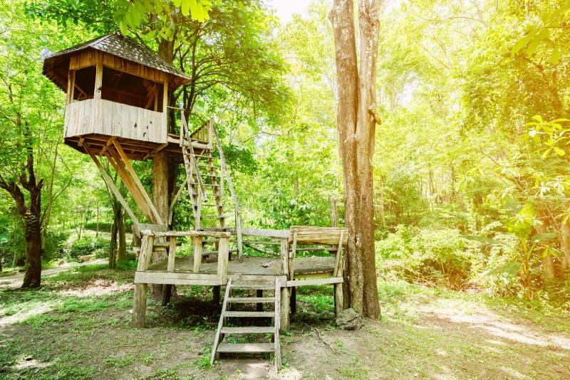 Παλαιές ξύλινες καλύβες σε ένα μεγάλο δέντρο στο εθνικό πάρκο στοκ εικόνες με δικαίωμα ελεύθερης χρήσης
