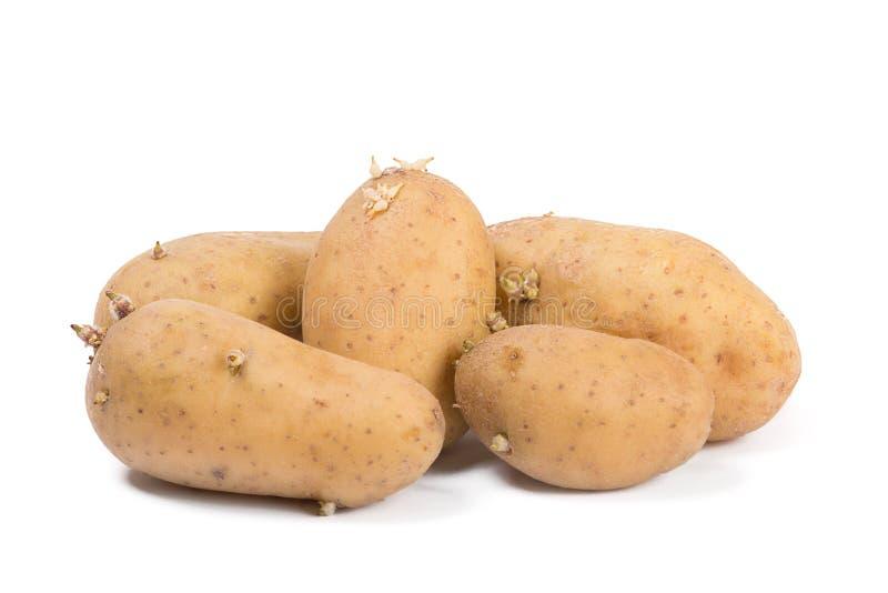 Παλαιές πατάτες με τους νεαρούς βλαστούς που απομονώνονται στο άσπρο υπόβαθρο στοκ εικόνα με δικαίωμα ελεύθερης χρήσης