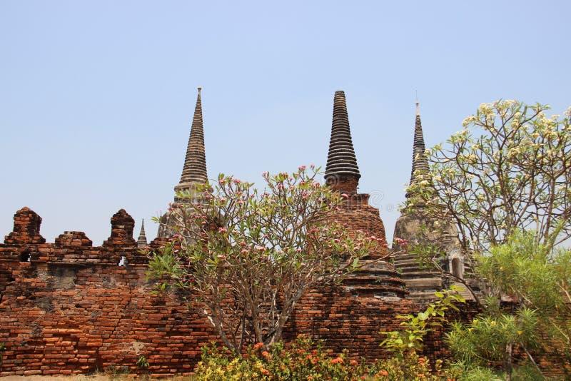 Παλαιές Stupa και άνθιση Plumeria στοκ εικόνα