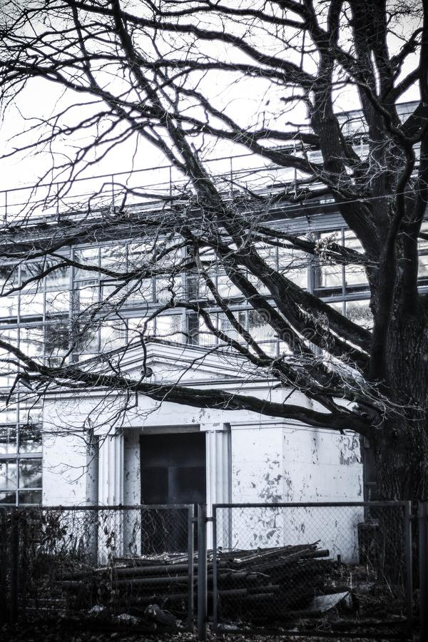 Παλαιός εγκαταλειμμένος Λευκός Οίκος με ένα δέντρο στοκ εικόνα