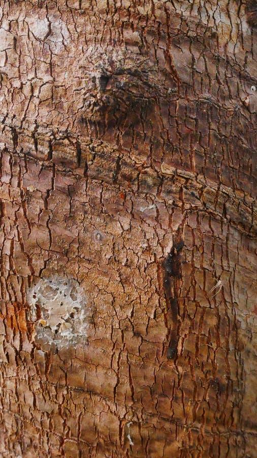 Παλαιός λαστιχένιος φλοιός σύστασης στοκ εικόνα