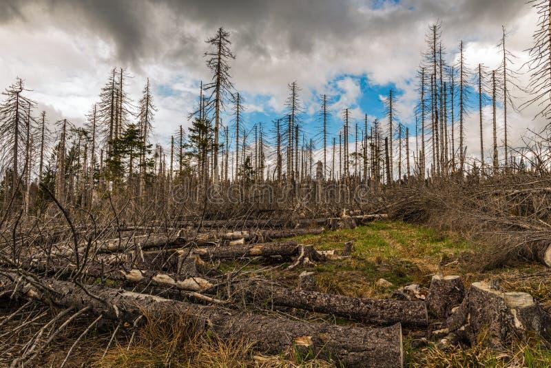 Παλαιός ξηρός άγριος και καταρριφθείς ξύλινος και νεφελώδης ουρανός στοκ εικόνες
