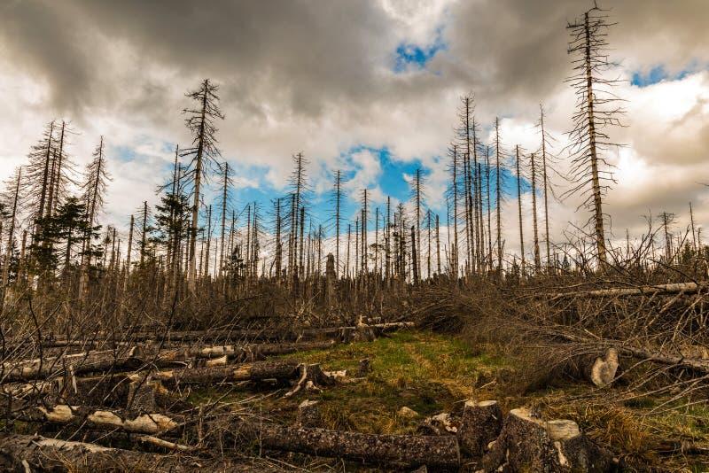 Παλαιός ξηρός άγριος και καταρριφθείς ξύλινος και νεφελώδης ουρανός στοκ εικόνα με δικαίωμα ελεύθερης χρήσης