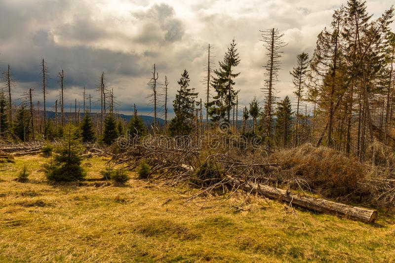 Παλαιός ξηρός άγριος και καταρριφθείς ξύλινος και νεφελώδης ουρανός στοκ φωτογραφίες